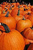 Roadside produce market, fall season