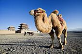 Jiayuguan City. Jiayu Pass Fort (W.H.). Gobi Desert. Gansu Province. The Silk Road. China. Nov. 2006