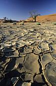 Drought in Africa, Namib Desert, Namibia