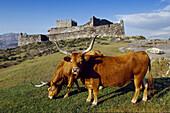 Lindoso castle (13th century) and Cachena cows. Cabril valley. Peneda-Gerês National Park. Minho. Tras-os-Monte, Portugal