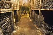 Lopez de Heredia winery. Wine aging in old bottles. Villa Tondonia. Haro, La Rioja, Spain
