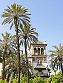 Hotel Alfonso XIII. City of Sevilla. Andalucia. Spain