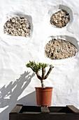 Color, Colour, Concept, Concepts, Daytime, Detail, Details, Exterior, Facade, Façade, Facades, Façades, Flowerpot, Flowerpots, House, Houses, Outdoor, Outdoors, Outside, Plant, Plants, Pot, Pots, Stone, Stones, Vertical, Wall, Walls, White, A75-216824, a