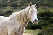 Animal, Animals, Color, Colour, Daytime, Exterior, Farm animals, Farming, Head, Heads, Horizontal, Horse, Horses, Livestock, Mammal, Mammals, Nature, One, One animal, Outdoor, Outdoors, Outside, Wild, Wildlife, Zoology, A75-301631, agefotostock