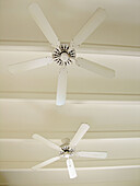 Beam, Beams, Ceiling, Ceilings, Color, Colour, Concept, Concepts, Detail, Details, Fan, Fans, Indoor, Indoors, Inside, Interior, Low angle view, Old fashioned, Old-fashioned, Pair, Stopped, Two, Ventilation, Ventilator, Ventilators, Vertical, View from b
