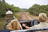 Game drive in the Phinda private park. Kwazulu-Natal province. South Africa