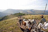 Visitors taken to the village by ox cart. The Simunye zulu village where visitors can be accomodated in zulu styleKwazulu-Natal province. South Africa