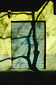 Branch, Branches, Cities, City, Color, Colour, Concept, Concepts, Daytime, Entrance, Entrances, Entries, Entry, Exterior, Facade, Façade, Facades, Façades, Iron gate, Iron gates, Locked, Outdoor, Outdoors, Outside, Shadow, Shadows, Silhouette, Silhouette
