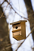 Bird house, Bird houses, Birdhouse, Birdhouses, Color, Colour, Concept, Concepts, Daytime, Ecology, Environment, Exterior, Fauna, Forest, Forests, Hang, Hanging, One, Ornithology, Outdoor, Outdoors, Outside, Tree, Trees, Wild, Wildlife, Wood, Wooden, Woo