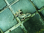 Animal, Animals, Asphalt, Close up, Close-up, Closeup, Color, Colour, Concept, Concepts, Daytime, Dead, Death, End, Exterior, Lizard, Lizards, Negative, Negative concept, One, One animal, Outdoor, Outdoors, Outside, Pavement, Pavements, Reptile, Reptiles