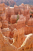 USA, Utah, Panguitch. Bryce Canyon sandstone formations viewed from trail in the Bryce amphitheater.