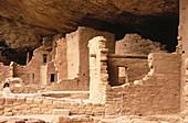 USA, Colorado, Mesa Verde. Spruce tree cliff dwelling abandoned Anasazi Indian dwellings.