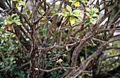 A bird sitting on a branch of a bush, Ulva Island, Steward Island, New Zealand
