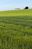 Grain field. Ciudad Real province. Spain