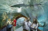 Visitors and shark at the Aquarium. San Sebastián, Guipúzcoa. Euskadi, Spain