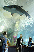 Visitors and shark at the Aquarium. San Sebastián, Guipúzcoa. Euskadi, Spain