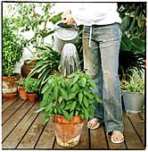 Adult, Adults, Anonymous, Blue jean, Blue jeans, Color, Colour, Contemporary, Daytime, Denim, Exterior, Female, Flowerpot, Flowerpots, Garden, Gardening, Gardens, Hobbies, Hobby, Hold, Holding, Horticulture, Human, Jean, Jeans, Leg, Legs, Leisure, One, O
