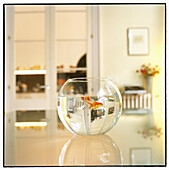 At home, Caught, Close up, Close-up, Closeup, Color, Colour, Concept, Concepts, Decoration, Fish, Fishbowl, Fishbowls, Fishes, Glass, Home, Indoor, Indoors, Inside, Interior, Mirror image, Mirror images, Object, Objects, Pet, Pets, Reflection, Reflection