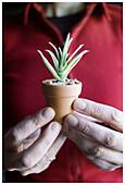 Adult, Adults, Close up, Close-up, Closeup, Color, Colour, Contemporary, Ecology, Environment, Finger, Fingers, Flowerpot, Flowerpots, Hand, Hands, Hobbies, Hobby, Hold, Holding, Horticulture, Human, Indoor, Indoors, Interior, Little, Miniature, Miniatur