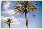 Blue, Cloud, Clouds, Color, Colour, Daytime, Exterior, Nature, Outdoor, Outdoors, Outside, Pair, Palm, Palm tree, Palm trees, Palms, Plant, Plants, Scenic, Scenics, Skies, Sky, Two, White, B75-550176, agefotostock