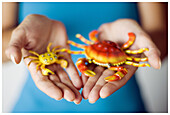 Adult, Adults, Close up, Close-up, Closeup, Color, Colour, Contemporary, Crab, Crabs, Crustacean, Crustaceans, Different, Fauna, Female, Figure, Figures, Hand, Hands, Hold, Holding, Human, Indoor, Indoors, Interior, Little, Marine life, Nature, One, One
