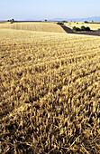 Aussen, Außen, Farbe, Feld, Felder, Land, Landbau, Ländlich, Landschaft, Landschaften, Landwirtschaft, Niemand, Tageszeit, Verlassen, Vertikal, A91-232281, agefotostock