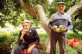 Men with custard apples at orchard. Almuñécar, Granada province. Spain