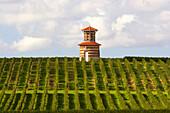 Bordeaux Wein: Weinberg mit Taubenturm bei Château Loudenne, Dept. Gironde, Médoc, Frankreich, Europa