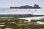 Oyster-culture in Cancale, dept Ille-et-Vilaine, Britany, France