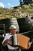 Vintage. Grape harvest. Music for the vintagers. Douro vineyards. The river Douro valley. Port wine (Vinho do Porto). Portugal