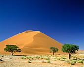 Trees, Scenic desert sand dune, Sossusvlei, Namib-naukluft desert park, Namibia.