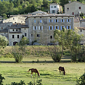 Two brown horses grazing. Savoillan village. Vaucluse. Provence. France
