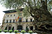 Old olive tree in front of Town Hall at Plaça de Cort. Palma de Mallorca. Majorca, Balearic Islands. Spain