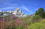 Blue, Blue sky, Color, Colour, Daytime, Ecosystem, Ecosystems, Exterior, Flower, Flowers, Grass, Grasses, Horizontal, Italy, Landscape, Landscapes, Matterhorn, Mountain, Mountain range, Mountains, Nature, Outdoor, Outdoors, Outside, Peak, Peaks, Scenic,