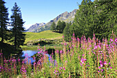 Blue, Blue Lake, Blue sky, Cervinia, Color, Colour, Daytime, Ecosystem, Ecosystems, Exterior, Flower, Flowers, Grass, Grasses, Horizontal, Italy, Landscape, Landscapes, Mountain, Mountain range, Mountains, Nature, Outdoor, Outdoors, Outside, Scenic, Scen