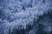 Background, Backgrounds, Canopy, Color, Colour, Covered, Daytime, Exterior, Forest, Forests, Horizontal, Natural background, Natural backgrounds, Nature, Outdoor, Outdoors, Outside, Perennial, Season, Seasons, Snow, Snow-covered, Snowcovered, Snowy, Tree