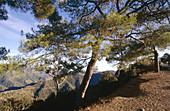 Troodos mountain range, Cyprus
