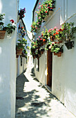 Narrow alleys loaded with geranium pots in old quartier Barrio de la Villa . Priego de Córdoba. Andalusia. Spain
