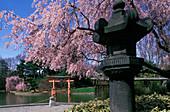Japanese hill and pond garden, Brooklyn botanical garden, New York, USA