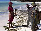 Women fishing, Jambiani beach. Zanzibar Island. Tanzania