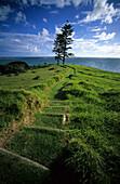 Grassy Track to Lovers Bay, Lord Howe Island, Australia
