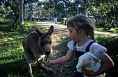 Little girl feeding an Eastern Grey Kangaroo at Sawpit Creek Campground, Kosciuszko National Park, New South Wales, Australia