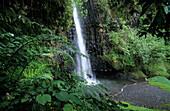 Vaiharuru Falls in Papanoo Valley, Cascade Vaiharuru in Vallee de Papanoo, Tahiti, French Polynesia, South Sea