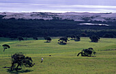 Discovery Bay Coastal Park, pastures and fields, sand dunes and ocean in the background, Victoria, Australia