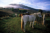 Morning scenery at Anglers Rest in the Victorian Alps, rural scene with horses, Victoria, Australia