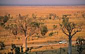Boab trees near the Napier Range, Gibb River Road, Western Australia, Australia