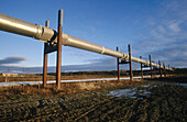 Oil pipeline. Taylor highway. North of Alaska. USA