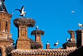 White stork (Ciconia ciconia) in nest. Alfaro cathedral. La Rioja. Spain