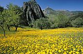 Landscape in Grazalema Natural Park. Cadiz province. Andalucia. Spain
