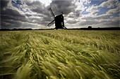 Pitstone Windmill on a Windy June Day